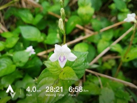วิ่งวันที่ 31