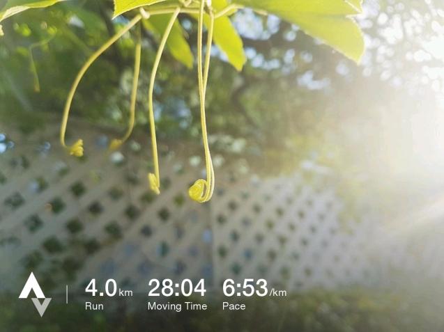 วิ่งวันที่ 33