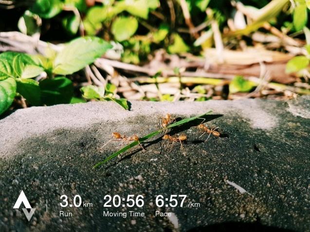 วิ่งวันที่ 27