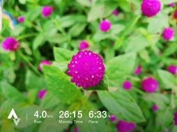 วิ่งวันที่ 36