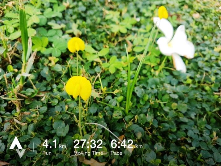 วิ่งวันที่ 40