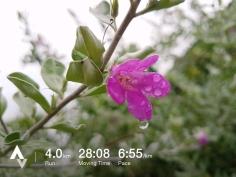 วิ่งวันที่ 32