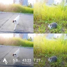 วิ่งวันที่ 9